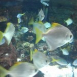 OPI_Living_Optimum_Performance-Istitute_Education-Departmen_Aquarium_Outing_feature
