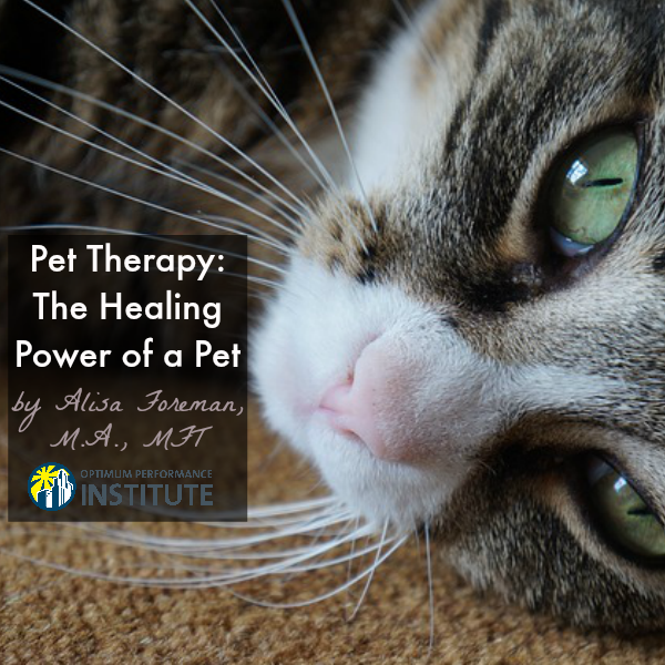 healing powers of animal therapy essay Animal therapy programs have gradually taken root in many elder care arenas, including the healing power of pets 4 ways to use music as medicine.