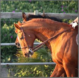 Susan Evans horses