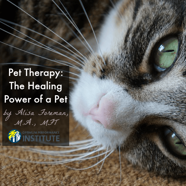 pet therapy healing